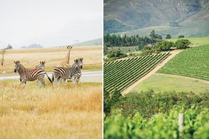Stellenbosch Wine Route activities