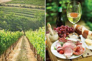 Stellenbosch Wine Route vineyards
