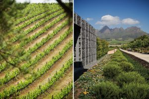 Stellenbosch Wine Route vineyards