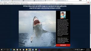 chris-fallows-of-apex-shark-expeditions