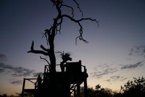 lion-sands-sleepout-platform-photo-carrie-hampton