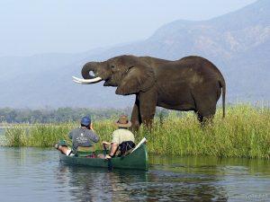 mana-pools-canoe-trail