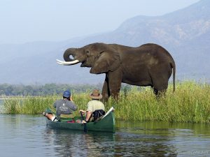 mana-pools-canoe-trail