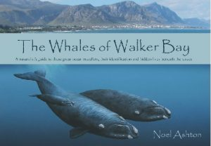whales-of-walker-bay-noel-ashton