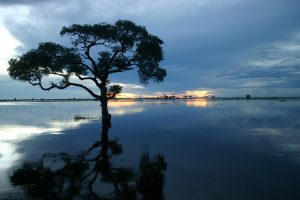 Chobe River in full flood_compressed