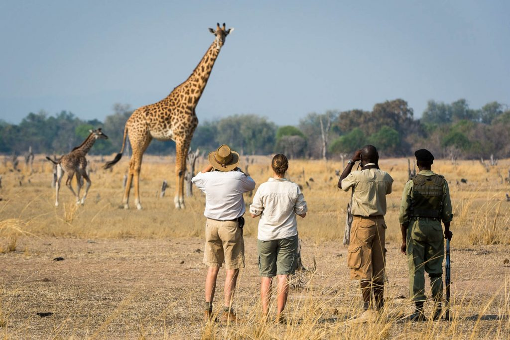 south-luangwa-walking-safari-wildlife-zambia-timbuktu-travel