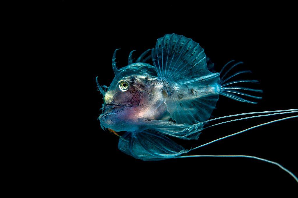 George-Stoyle-Planktonic-Predator-Scotland